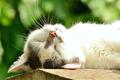 Katze im Entspannungsmodus